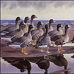Charles Tunnicliffe - #43608