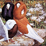 Charles Tunnicliffe - #43600