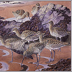 Charles Tunnicliffe - #43647