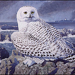 Charles Tunnicliffe - #43620