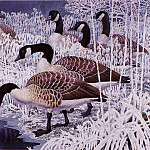 Charles Tunnicliffe - #43594