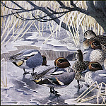 Charles Tunnicliffe - #43621