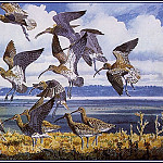 Charles Tunnicliffe - #43650