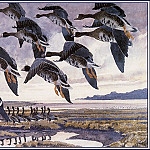 Charles Tunnicliffe - #43642