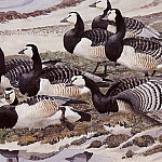 Charles Tunnicliffe - #43595