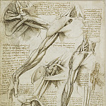 The muscles of the shoulder, arm and the bones of the foot, Leonardo da Vinci