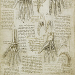 The bones, muscles and tendons of the hand, Leonardo da Vinci