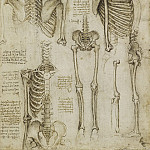 Leonardo da Vinci - The skeleton
