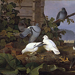 Unknown painters - Pigeons
