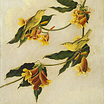 National Gallery of Art (Washington) - Joseph Bartholomew Kidd after John James Audubon - Yellow Warbler