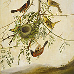 Joseph Bartholomew Kidd after John James Audubon – Orchard Oriole, National Gallery of Art (Washington)