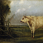 Attributed to John Woodhouse Audubon – A Young Bull, National Gallery of Art (Washington)