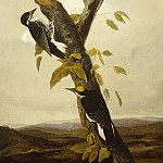 Joseph Bartholomew Kidd after John James Audubon - Black-Backed Three-Toed Woodpecker, National Gallery of Art (Washington)