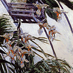 Orchids – 1893, Gustave Caillebotte