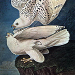 Audubon, John James , American artists