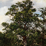 Wolfgang-Adam Töpffer – Oak Tree, Metropolitan Museum: part 3