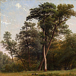 Metropolitan Museum: part 3 - Louis-Auguste Lapito - Clearing at the Edge of a Wood