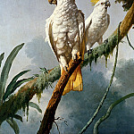Barraband Jacques A Pair Of Sulphur Crested Cocatoos, French artists
