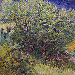 Bush, Vincent van Gogh