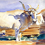 John Singer Sargent - White Ox at Siena