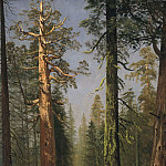 Los Angeles County Museum of Art (LACMA) - Albert Bierstadt - The Grizzly Giant Sequoia, Mariposa Grove, California