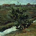 Early spring. Young pine, Isaac Ilyich Levitan