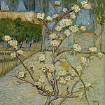 Vincent van Gogh - Blossoming Pear Tree