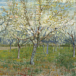 Orchard with Blossoming Apricot Trees