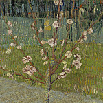 Almond Tree in Blossom, Vincent van Gogh