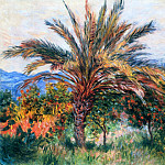 Palm Tree at Bordighera, Клод Оскар Моне