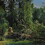 Ivan Ivanovich Shishkin - 50h59 felled tree in 1875, 5
