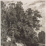 Forest on a steep bank. 1877 16, 1h12, Ivan Ivanovich Shishkin
