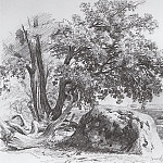 oak on the shore of the Gulf of Finland. 1857 23, 8h30, 7, Ivan Ivanovich Shishkin