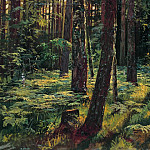 Ferns in the woods. Siverskaya 1883 36, 2h59. 6, Ivan Ivanovich Shishkin