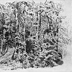 In the deciduous forest 1880 30. 6h45. 9, Ivan Ivanovich Shishkin