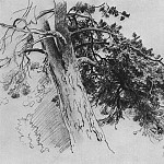 Part of the trunk of a pine. Mary Hovey 1890 33x48, Ivan Ivanovich Shishkin