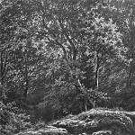 track in the woods. 1871 46, 2h34, 9, Ivan Ivanovich Shishkin