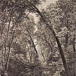 On the creek. 1895 106h80, 5, Ivan Ivanovich Shishkin