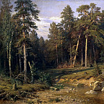 Pine Forest. Pine Forest in the Vyatka province