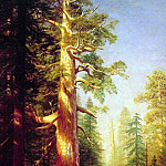 The Great Trees, Albert Bierstadt
