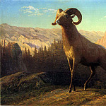 Albert Bierstadt - Bierstadt Albert A Rocky Mountain Sheep Ovis Montana