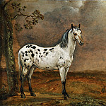 Part 5 Louvre - Paulus Potter (1625-1654) -- The Dappled Horse