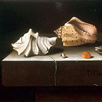 Part 5 Louvre - Adriaen Coorte -- Five shells on a stone slab