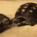 Mauritshuis - Albert Eckhout - Study of Two Brazilian Tortoises