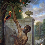 Tethart Philip Christian Haag - Orangutan from the Zoo of Stadholder Willem V, Picking an Apple, Mauritshuis
