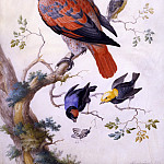 Европейская живопись; часть 1 - Anton HENSTENBURGH A Red and Gray Parrot and other Exotic Birds 32657 172