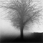 часть 4 -- European art Европейская живопись - Michael Kenna Tree Kilkenny Ireland 1982 40642 184