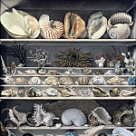 Part 2 Louvre - Vicomte de Barde Leroy -- Selection of shells