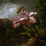 Martin Johnson Heade, American, 1819-1904 -- Orchids in a Jungle, Philadelphia Museum of Art
