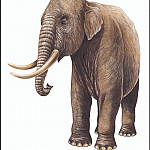 PO_Extinct_Animals - PO_ExtAn_057_Elephas_falconeri